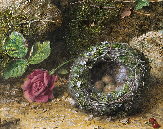 Rose and Bird's Nest