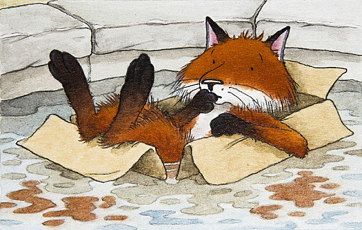 The Fox In His Cardboard Boat. Luckily the Pond Isn't Very Deep