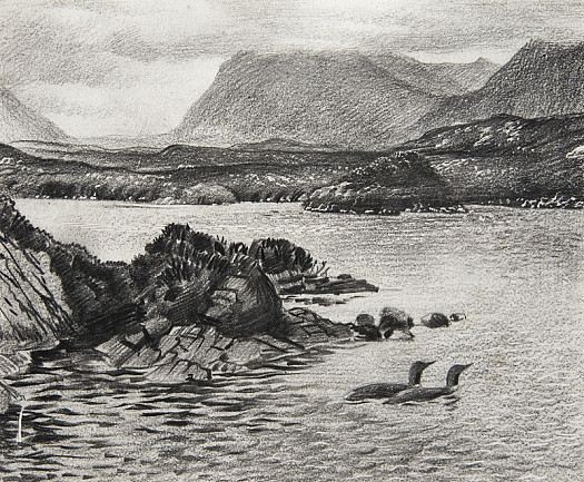 Red-Throated Divers On a Sutherland Loch