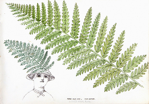 Fern-Ally Like – from Nature