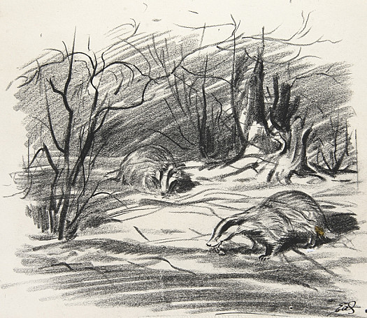 Badgers at their favourite hunting ground