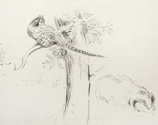 A pheasant and a badger