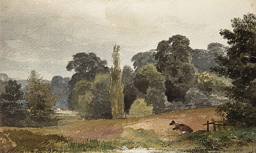 In Mr Baring's Grounds –near Exeter. Coloured on the spot