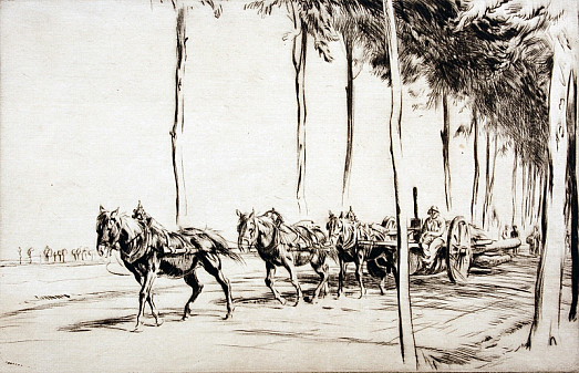 Three-Horse Team, Tree Lined Avenue, C1927