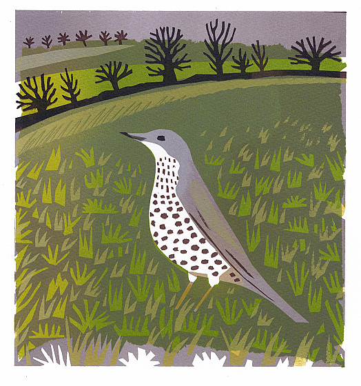 The Mistle Thrush