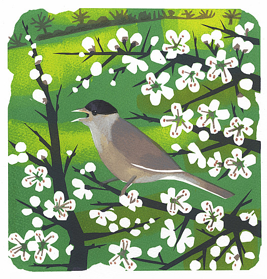 The Blackcap