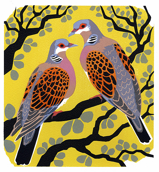 The Turtle Dove