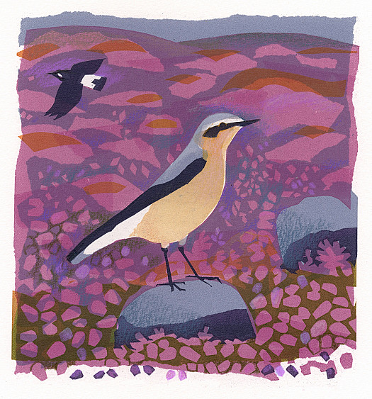 The Wheatear