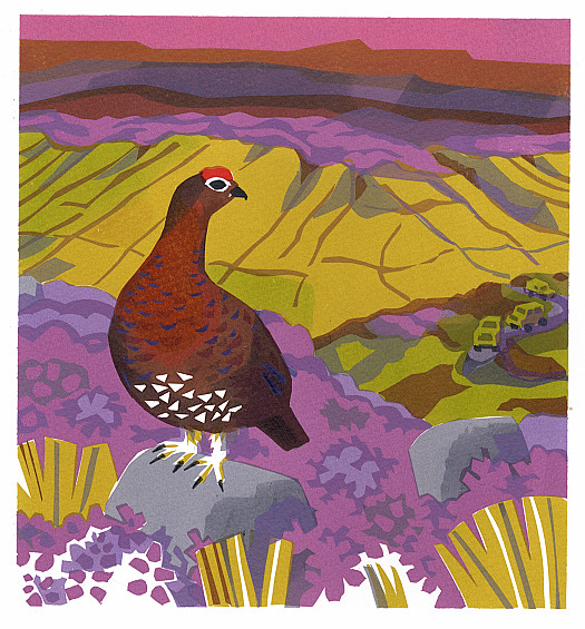 The Red Grouse