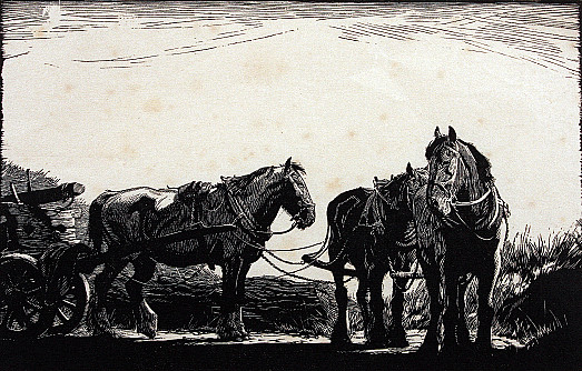 Three Horses Resting In Shafts, C1938