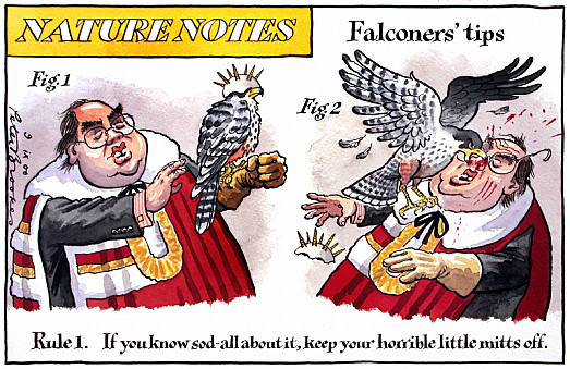 Falconers' Tips