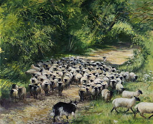 Rounding Up Sheep, Hidcote
