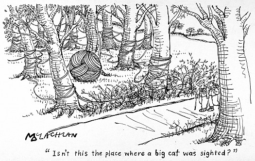 Isn't this the Place Where the Big Cat Was Sighted?
