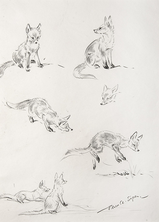 Foxes playing