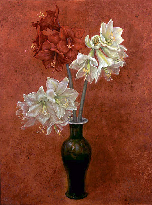 Amaryllis On Terracotta