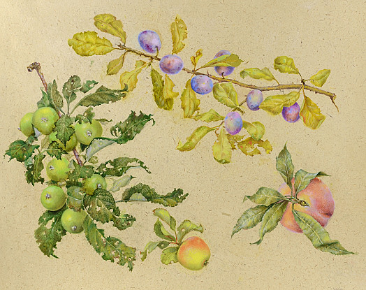 Crab Apples, Damsons and Peach