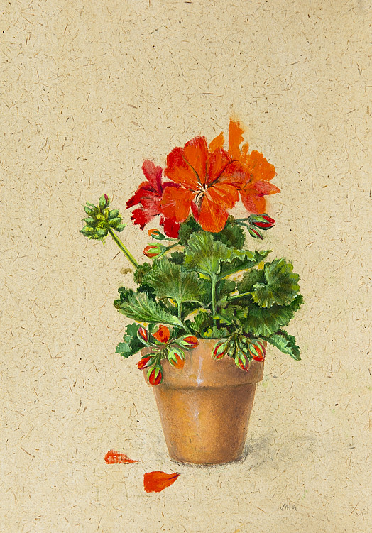Small Pelargonium