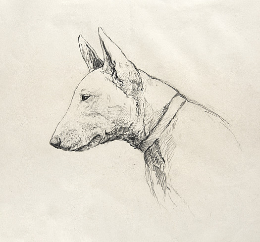 The Whimsical Bull-Terrier of Unshakeable Loyalty and a Sense of Humour
