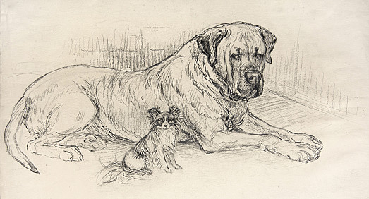 The Long and the Short of It, and both Prize-Winners. Captain, a Bull Mastiff, and Tricksy, a Papillon