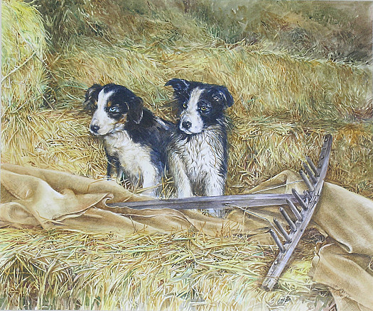 Sheep Dog Pups with a Hay Rake