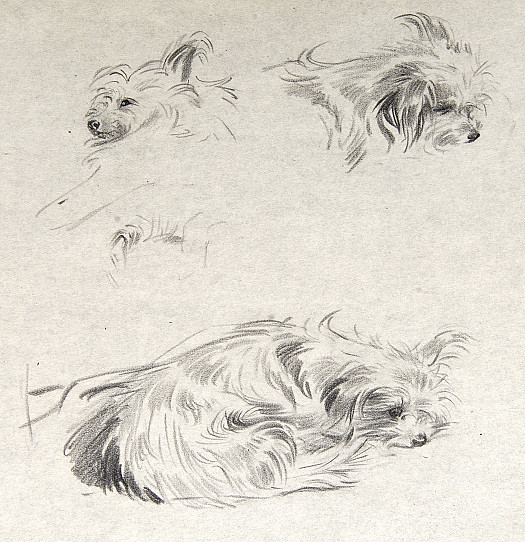 Study for a Dog