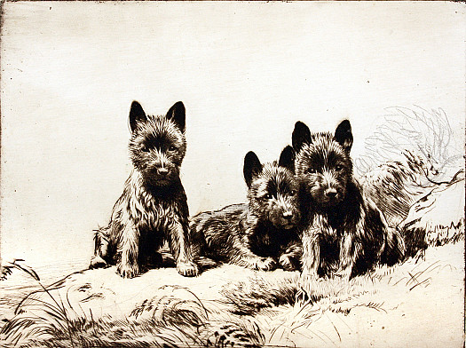 Three Black Scotties, C1927
