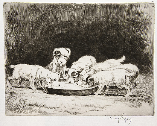 C1927 Sealyham Puppies