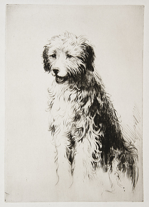 Old English Sheepdog, C1927