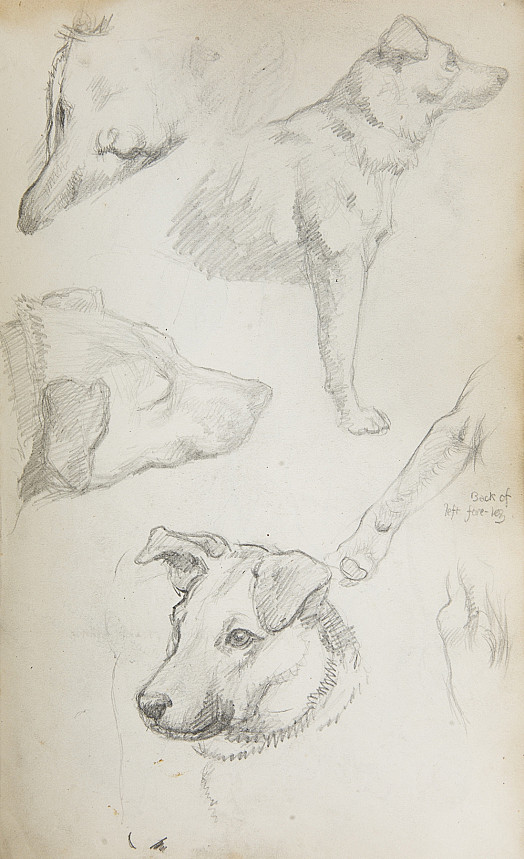 Studies of a Dog
