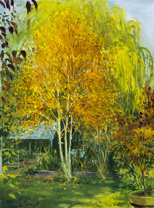 Birch Tree – Autumn