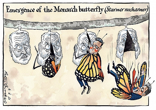 Emergence of the Monarch butterfly