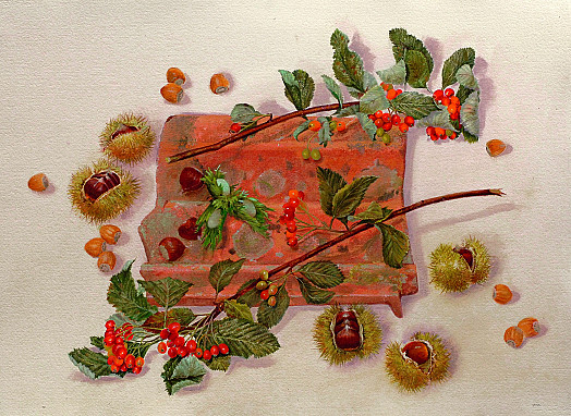 Hazelnuts, Chestnuts and Berries