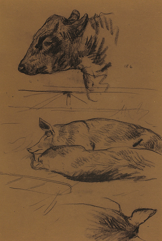 Cow's Head and Sleeping Pigs