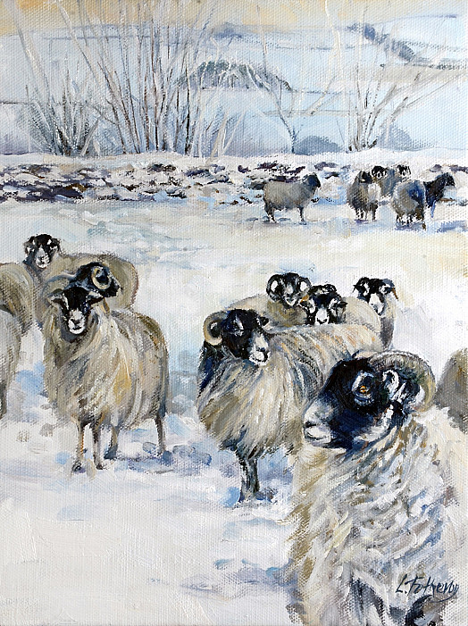 Swaledales in Snow