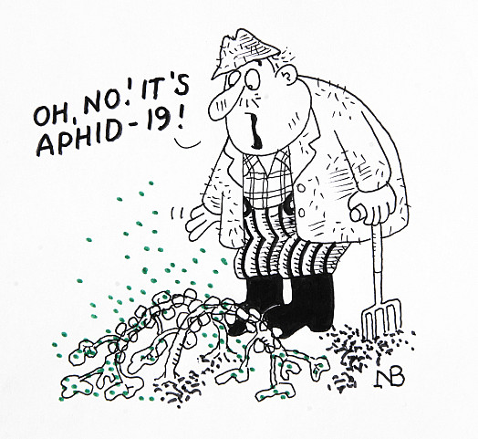 Oh, no! It's Aphid-19!