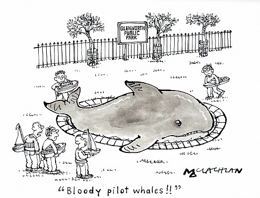 Bloody Pilot Whales!!