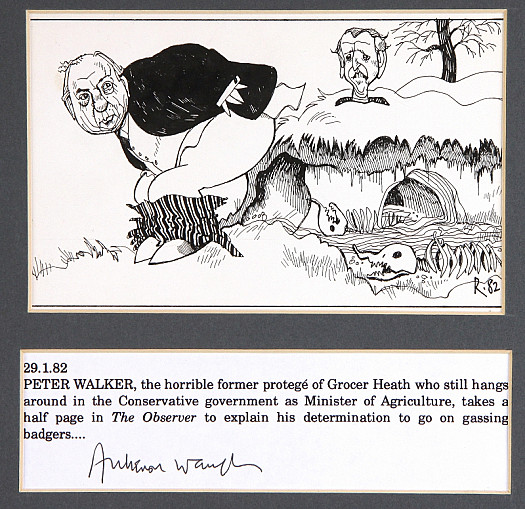 Peter Walker, the Horrible Former Protege of Grocer Heath Who Still Hangs Around In the Conservative Government as Minister of Agriculture, Takes a Half Page In the Observer to Explain His Determination to Go On Gassing Badgers