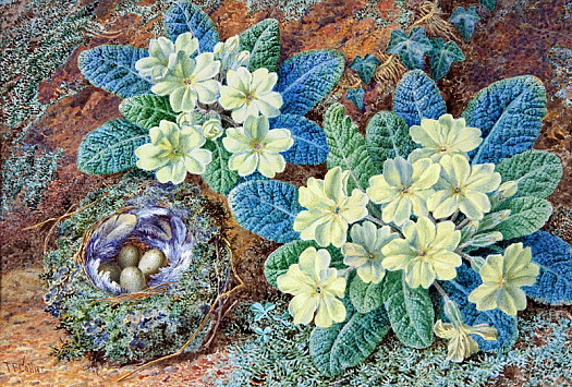 Primroses and a Birds Nest