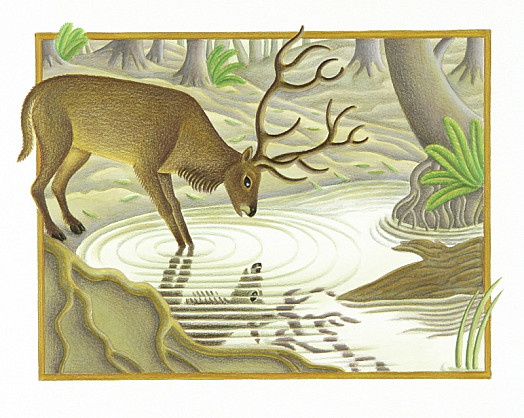 A Tall and Handsome Stag Came to a Pool to Drink, and as He Drank He Saw His Reflection In the Still Water