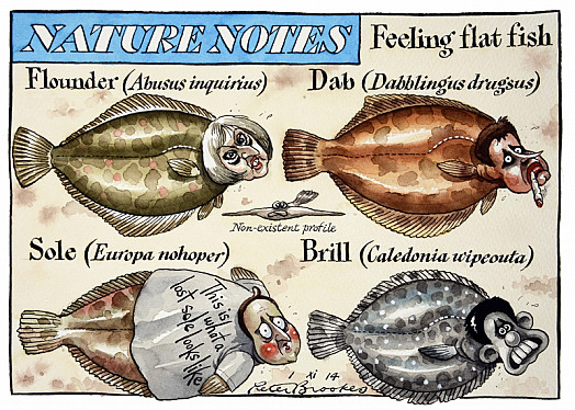 Nature Notes - Feeling Flat Fish