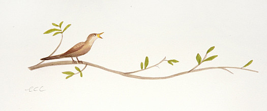 A Nightingale Sang On the Branch of a Tree