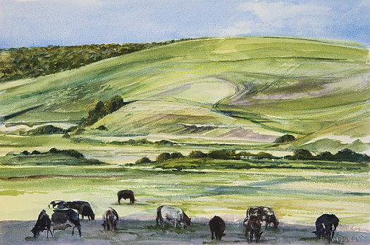 Cows, Cuckmere Valley