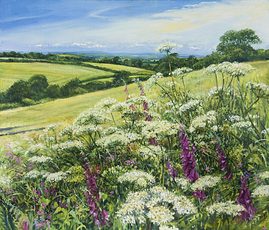 Field with Foxgloves, Devon