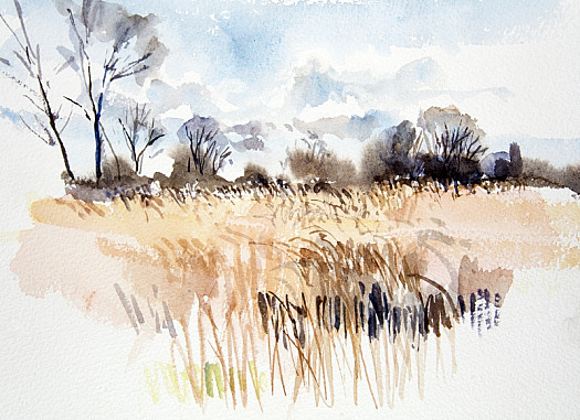 Expanses of Reeds