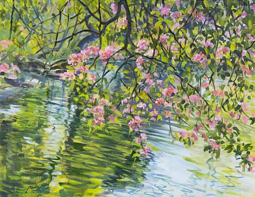 Blossom over Water, St James's Park
